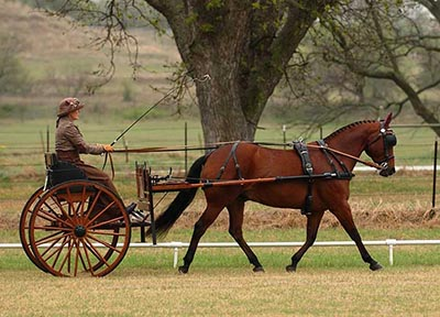 Image of G4 Equine owner Lorri Wallis riding a single person carriage